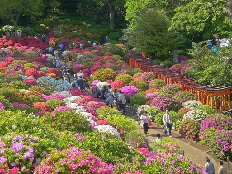 vista dall'alto di persone che camminano in un sentiero di ujn vivaio e attorno  tantissimi cespugli di piante colorate
