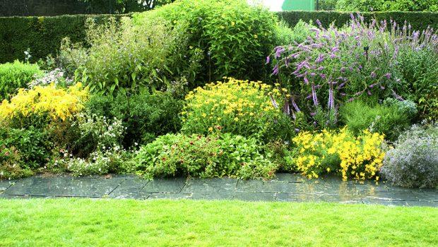 dei cespugli con dei fiori viola e gialli in un giardino