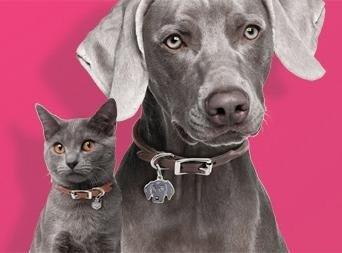 cane e gatto con collare e medaglietta