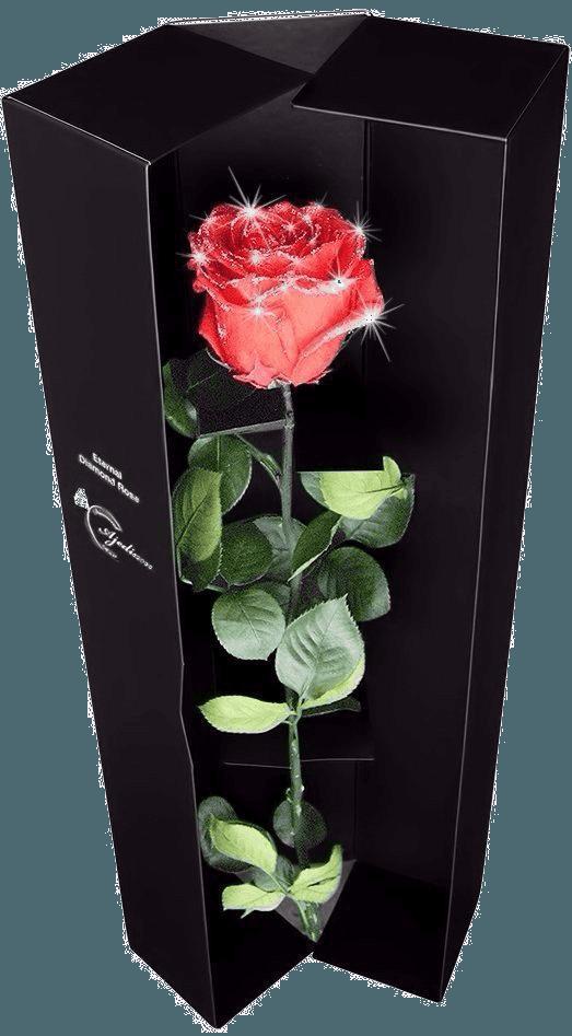 Diamonds on Roses