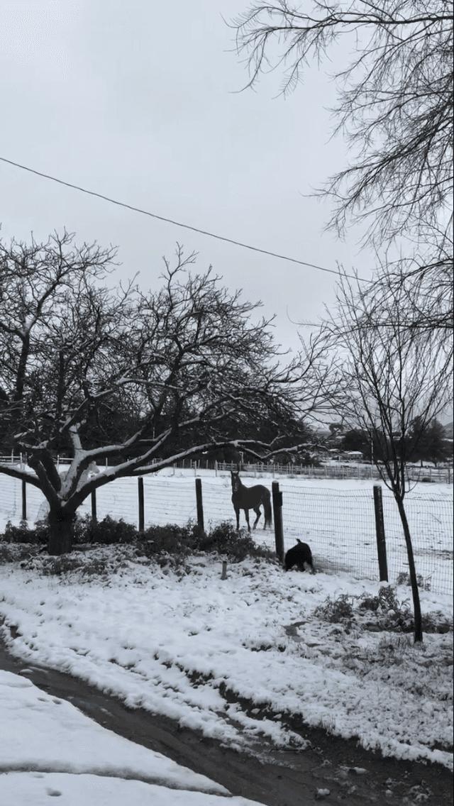 ranchita property