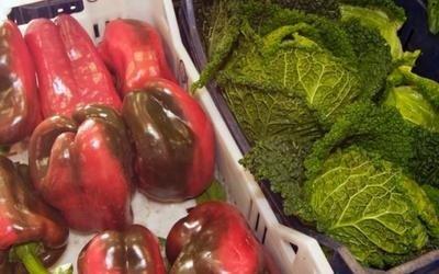 vendita peperoni