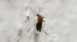 pesticidi zanzara