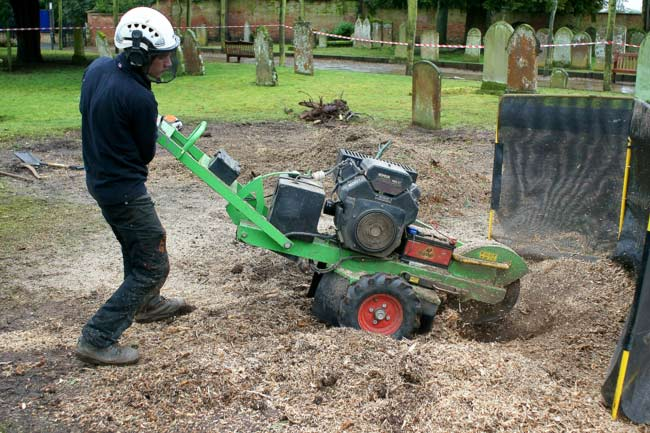 Our grinders remove virtually all of the stump.