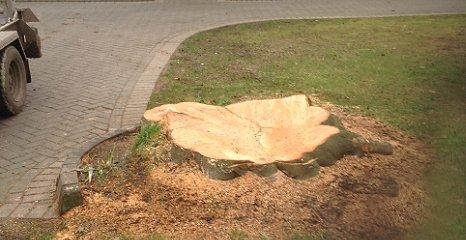 stumped tree
