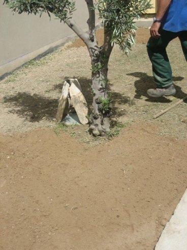 piantumazione albero
