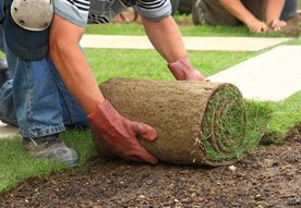 quality turf professional turf suppliers
