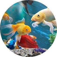 pesci d'acqua dolce