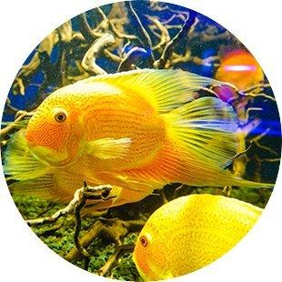 pesci tra i coralli