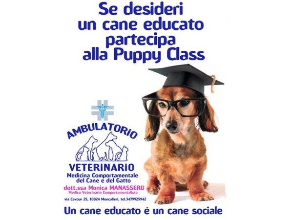 Puppy Class poster