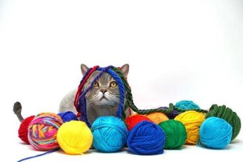 comportamento gatto