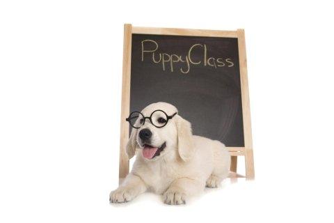 Labrador cucciolo con lavagna
