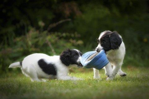 puppy class torino