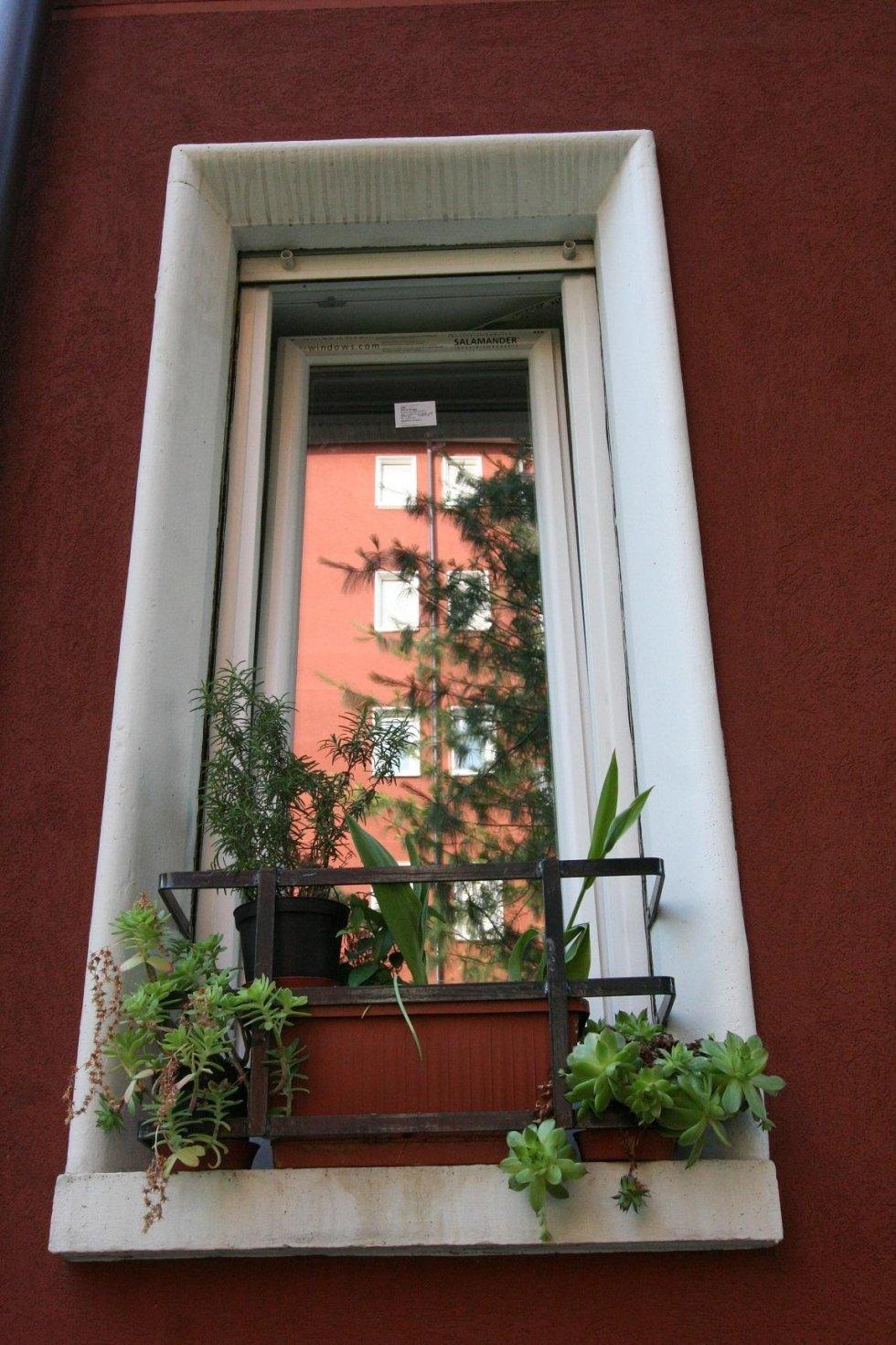 vista frontale di una finestra con piante sul davanzale