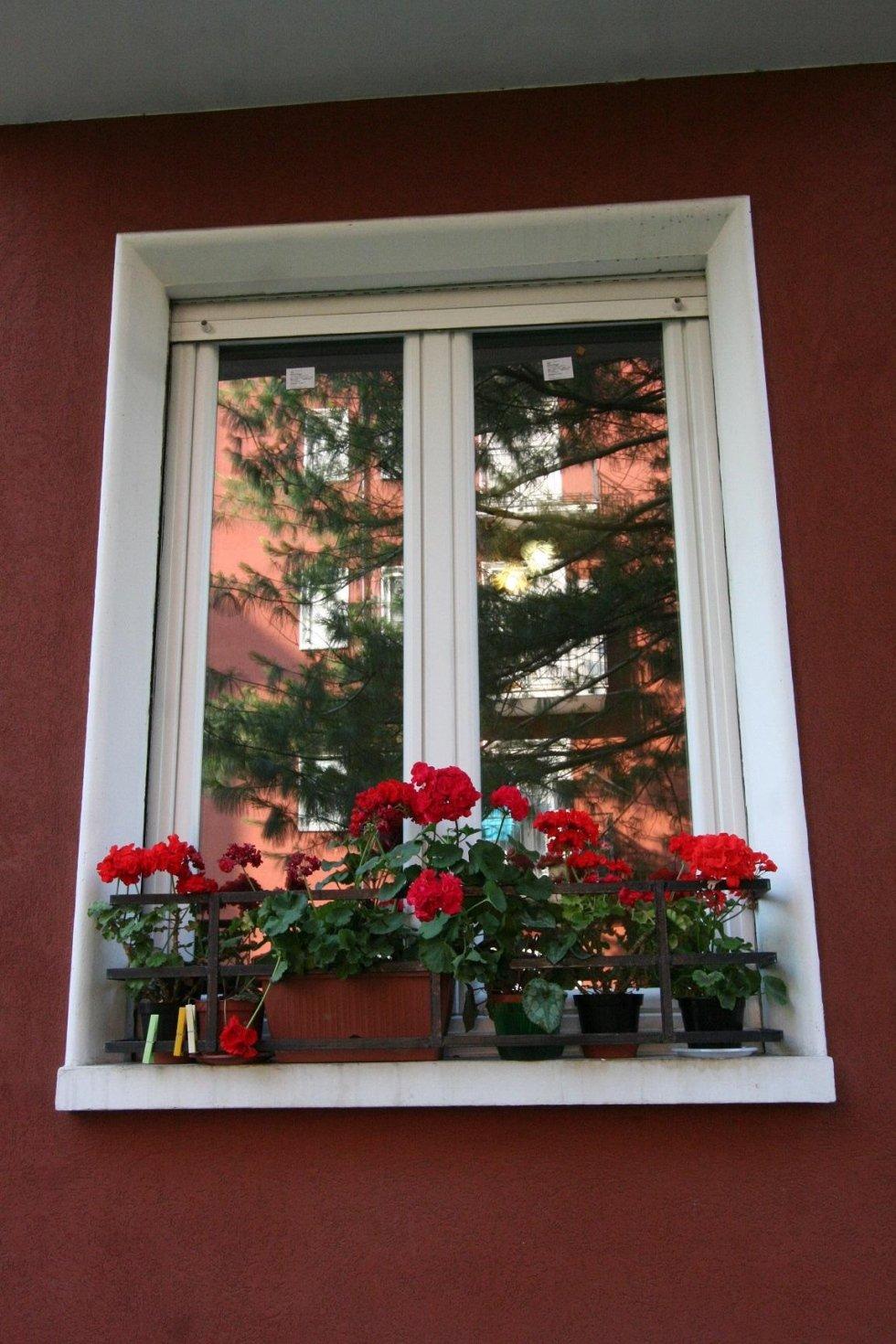 finestra con fiori rossi sul davanzale