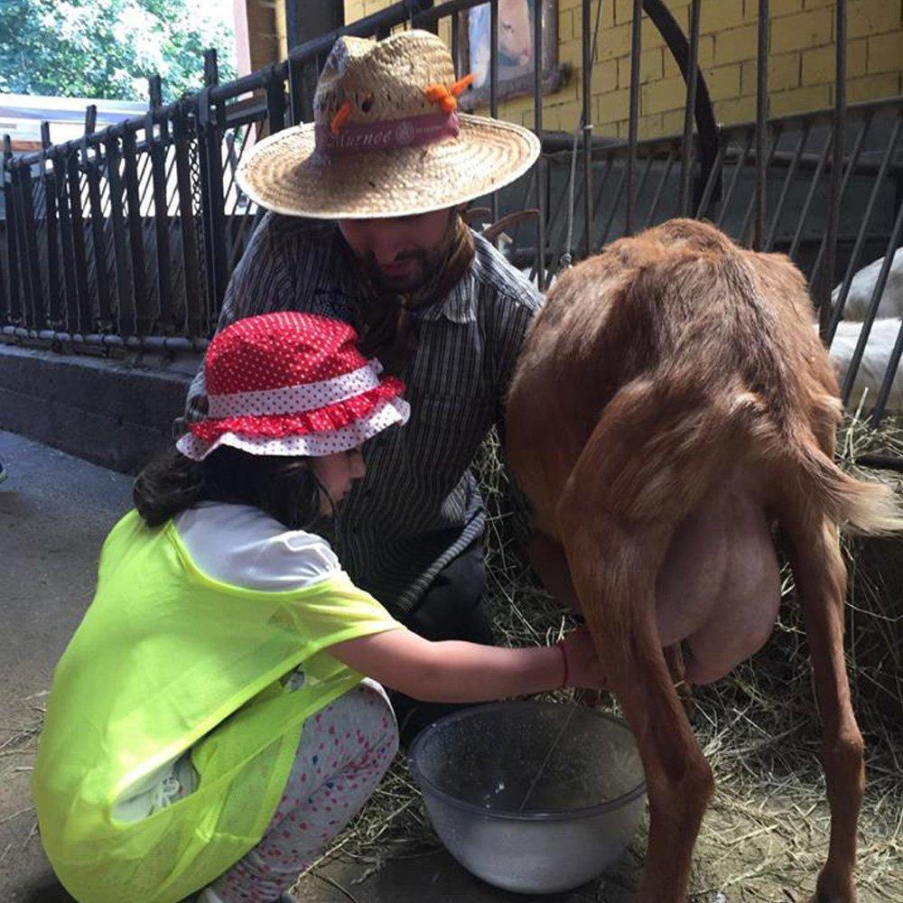 bambina nella fattoria didattica