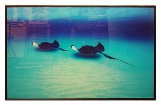 'Stingrays' limited Edition photo in black frame