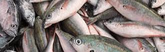 smaltimento sottoprodotti ittici