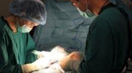 interventi_veterinari