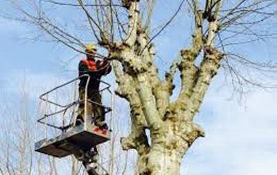 potatura alberi provincia torino