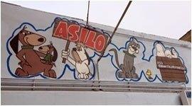 asilo per animali