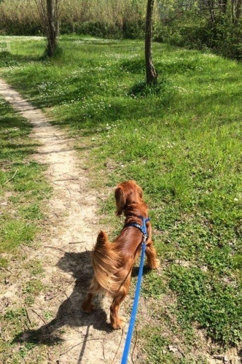 tecnico dog-orienteering
