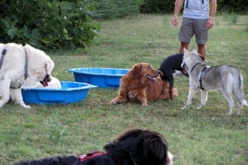 accudimento cani
