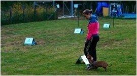 correzione comportamento cani