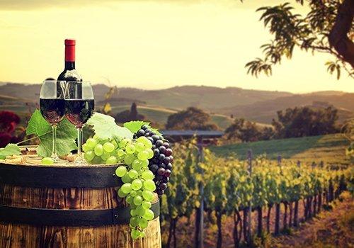 botte di vino con vigna