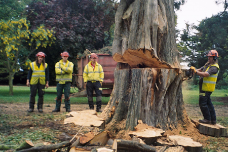sectional tree felling