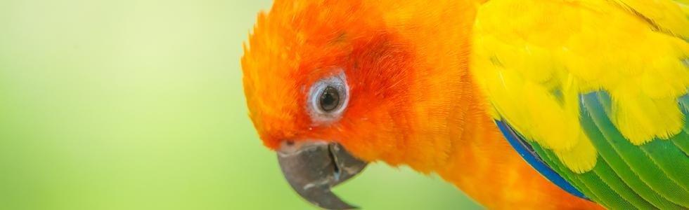 Vendita pappagallini