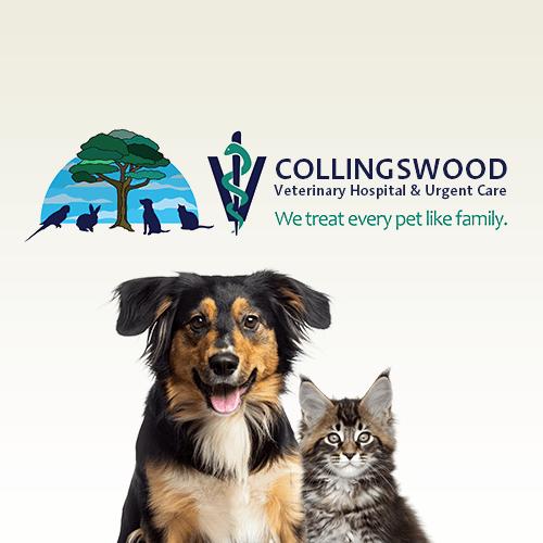 Vet Clinic In Collingswood Cherry Hill Nj Animal Hospital