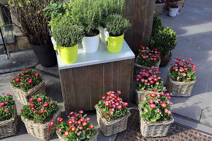 online flowers and plants in Rangiora