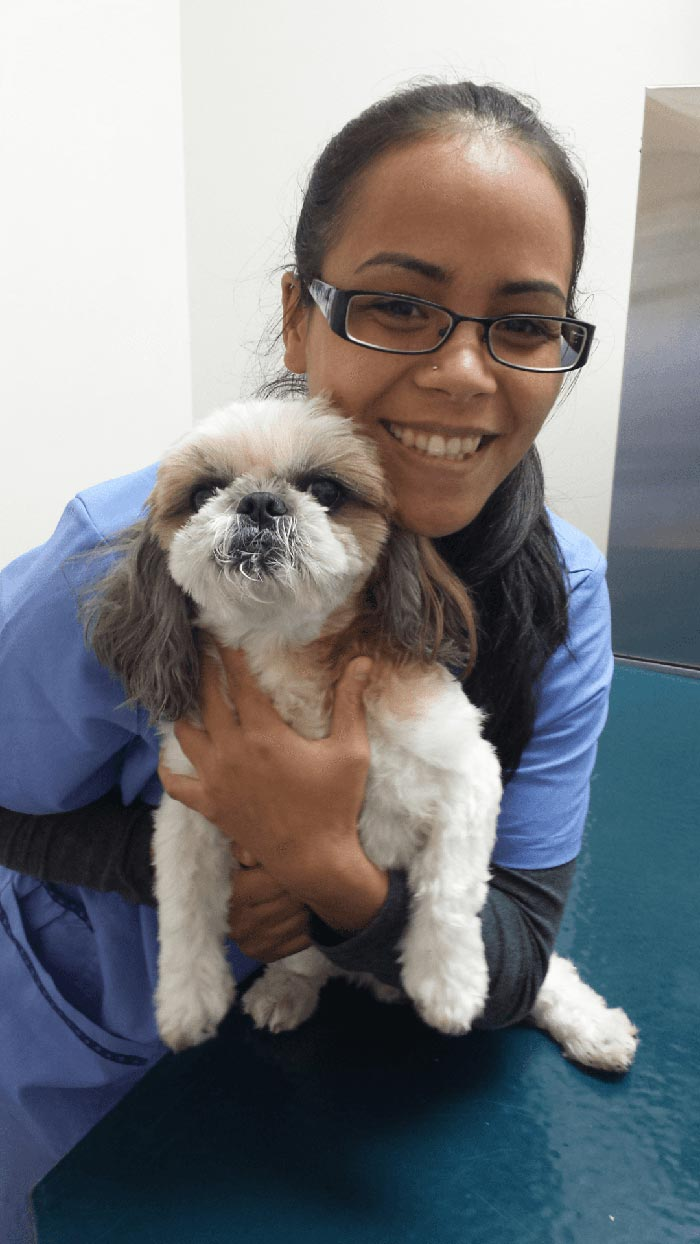 Young girl holding the dog at the clinic in Honolulu