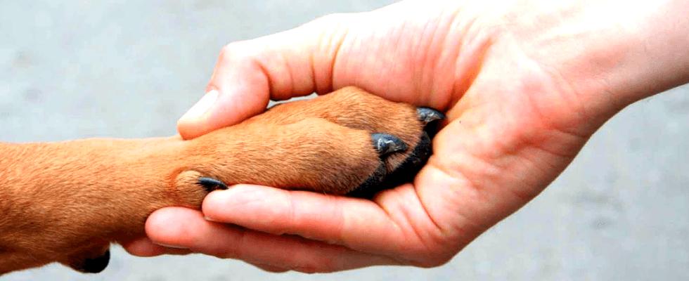 Cura cani