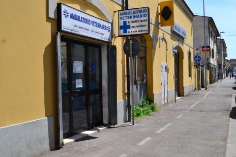 esterno veterinario
