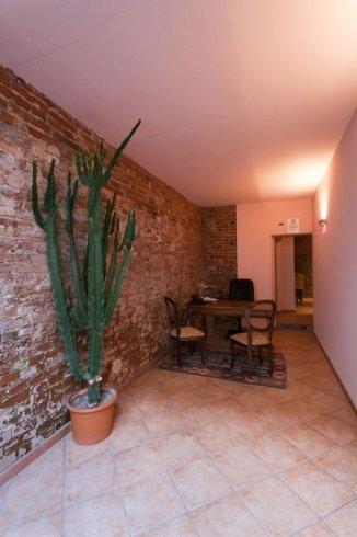 un vaso con una pianta grassa e delle sedie