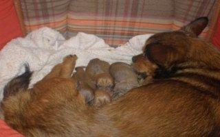 urgenze veterinario