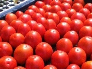 pomodori da salsa in cassetta