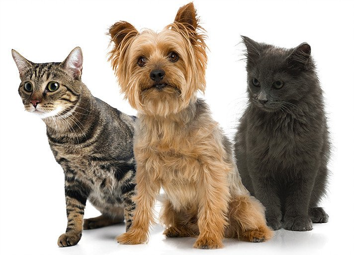 Dogs and cats - keep free of fleas and ticks and mosquito bites
