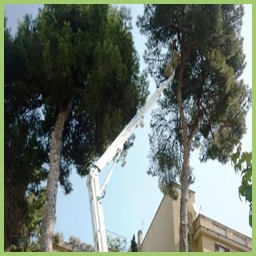 Potatura alberi e siepi