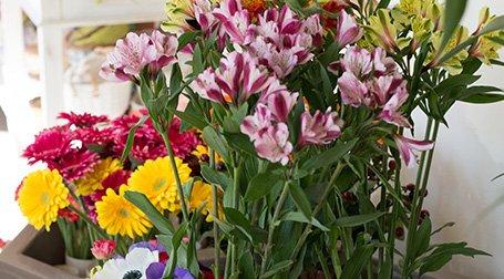 Delle piante con dei fiori di color rosa, giallo e verde