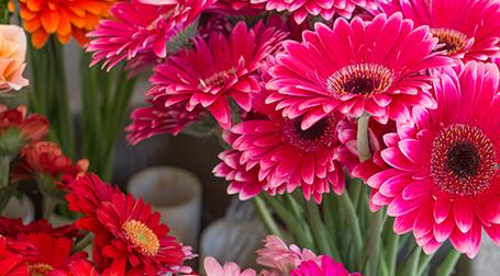 Dei fiori di color rosso e fucsia