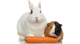 mangime per conigli, coniglietti