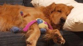 accessori per cani, giochi educativi per cani
