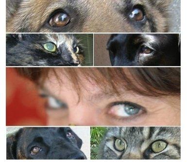 cani, catti, animali, toelettatura