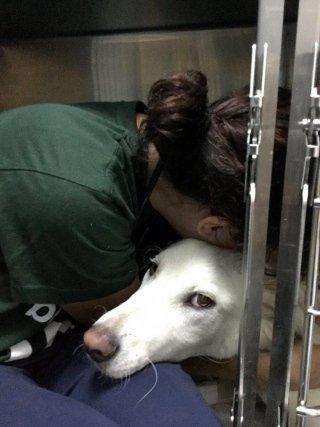 ricoveri veterinari