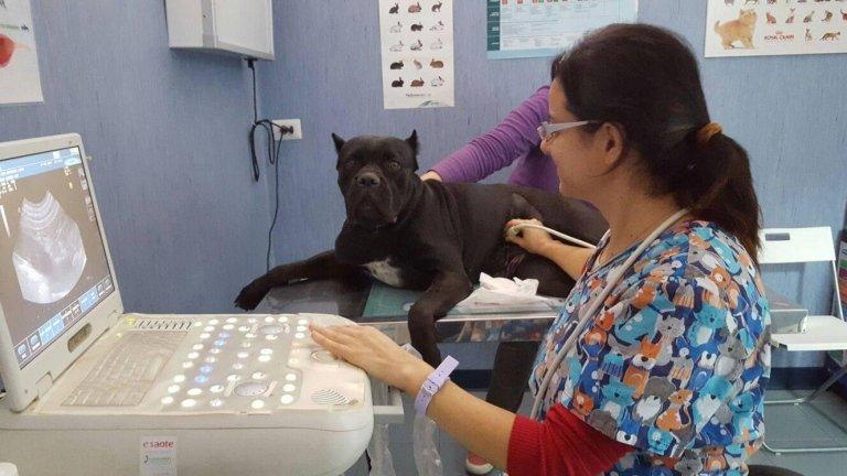 ecografia cane