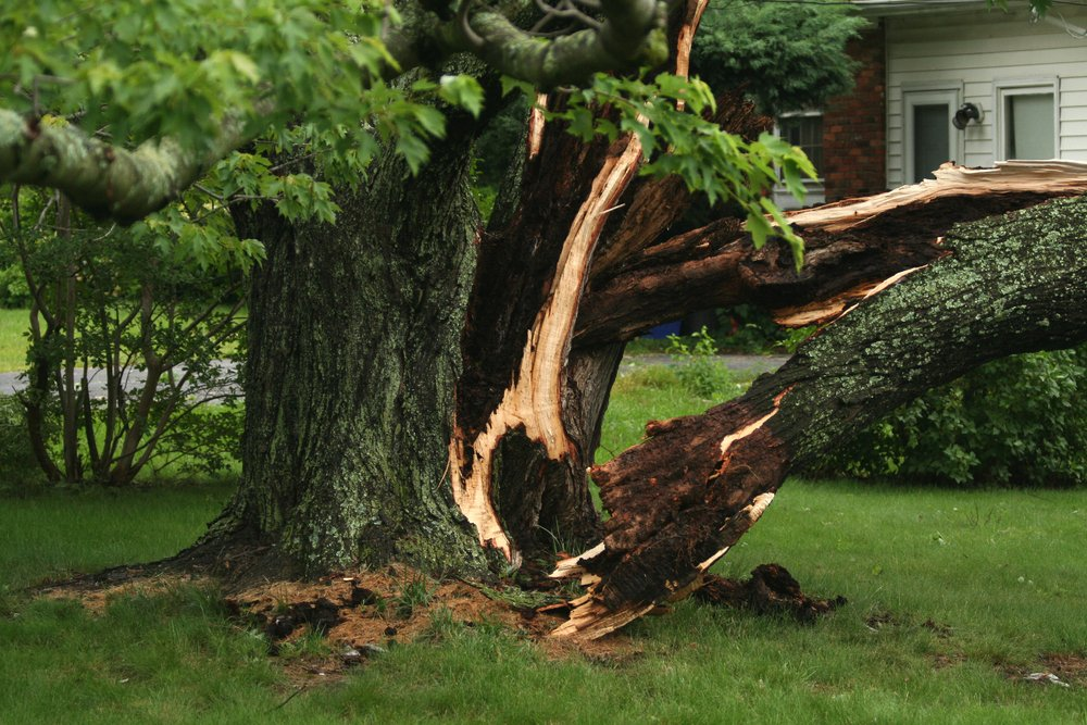 A park in Cincinnati, OH looked after by our experts in tree maintenance and removal services