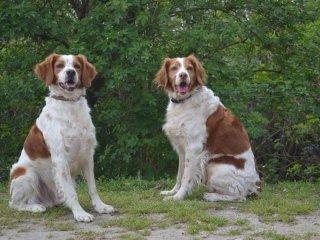 sgambo per cani
